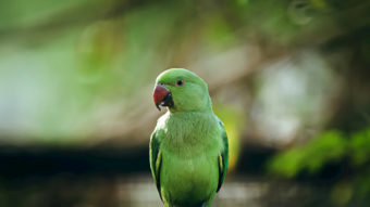 The parrots of Athens 1